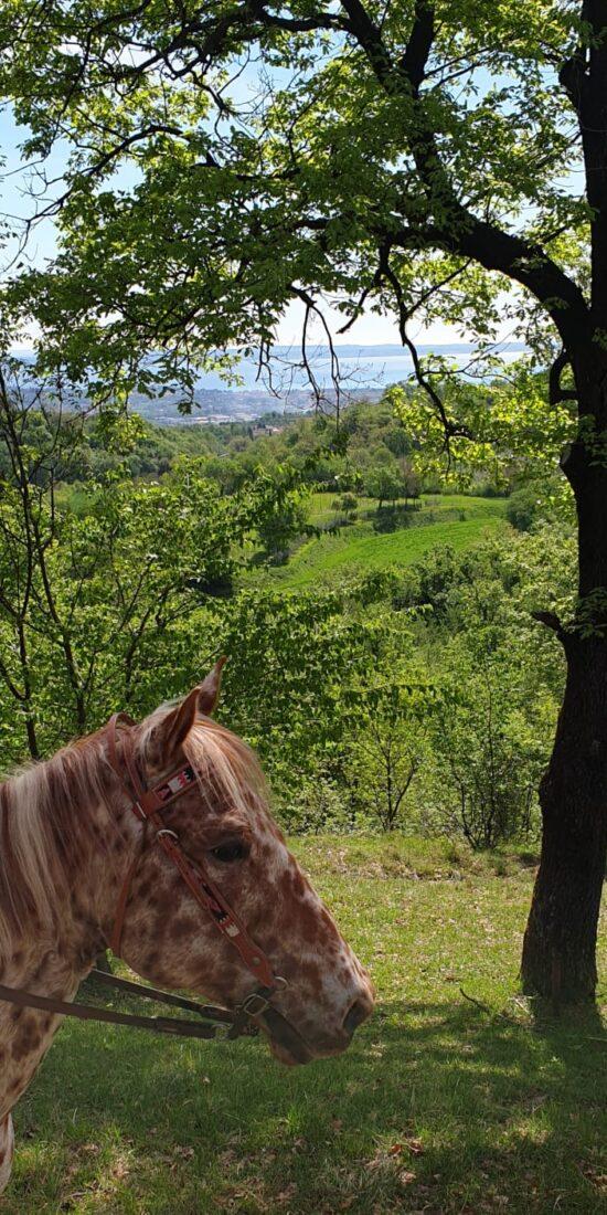 Passeggiata a cavallo colline lago di garda