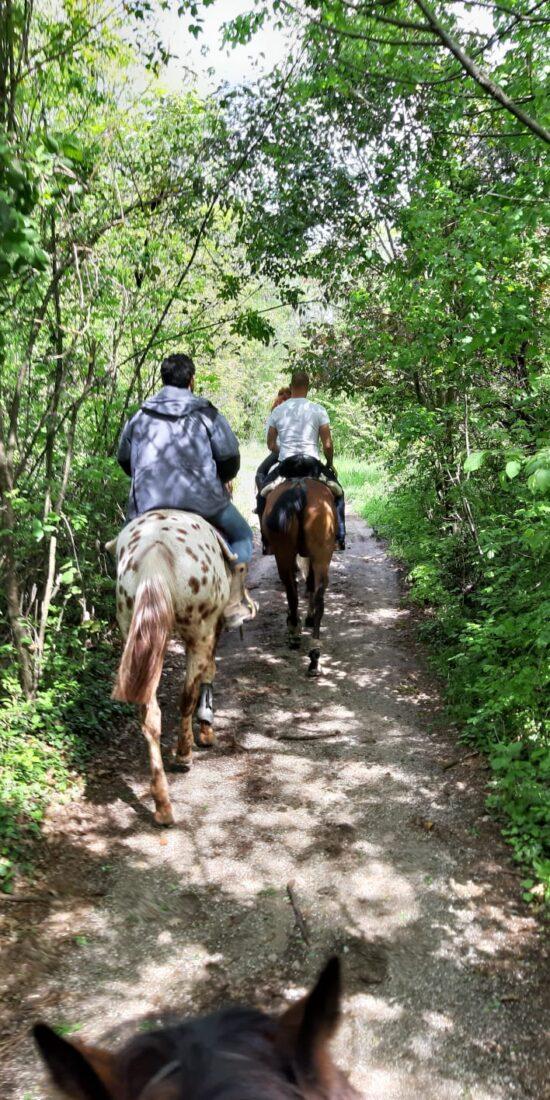 Passeggiata-a-cavallo-colline-lago-di-garda