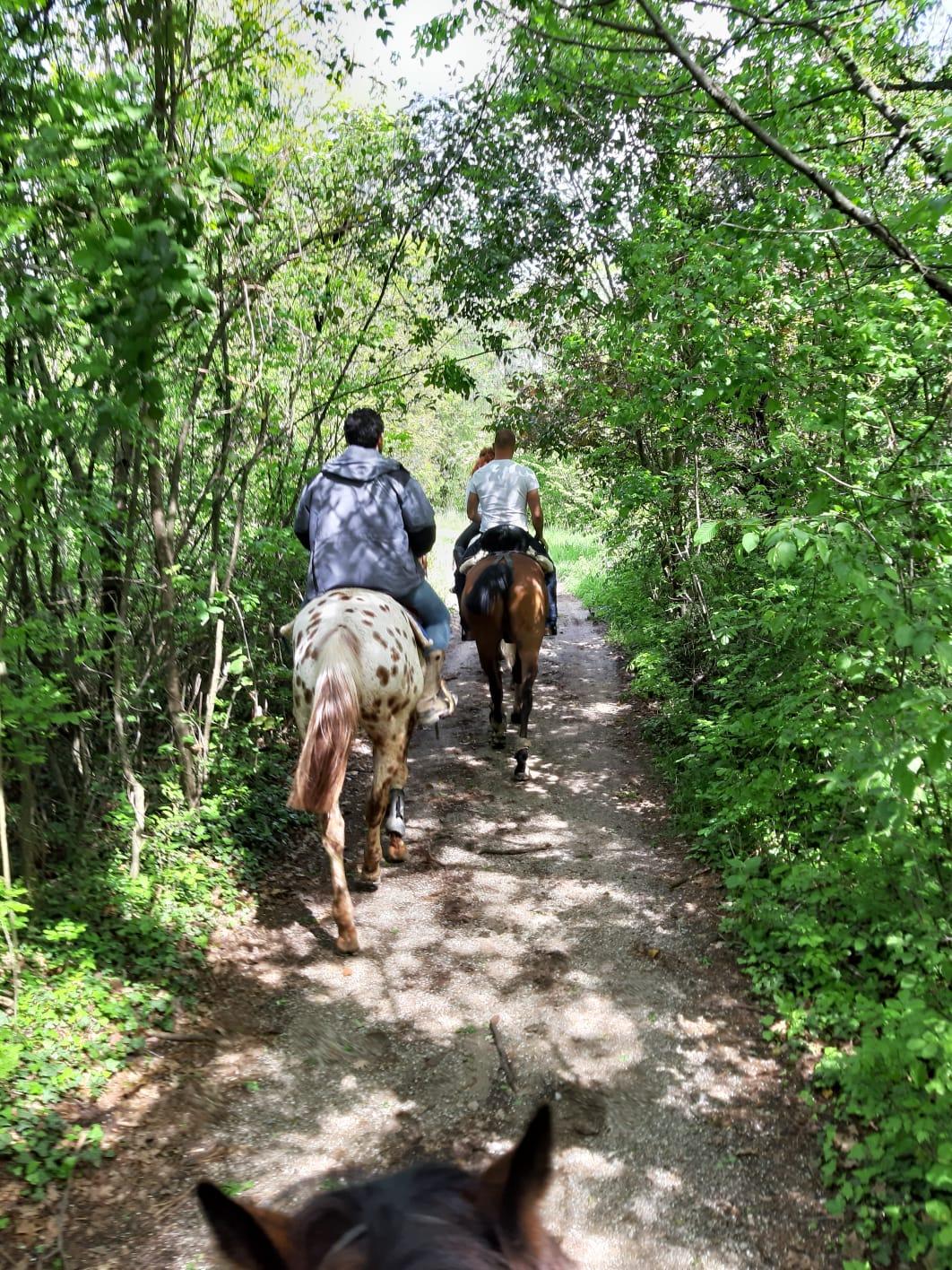 Horseback tour hills lake garda
