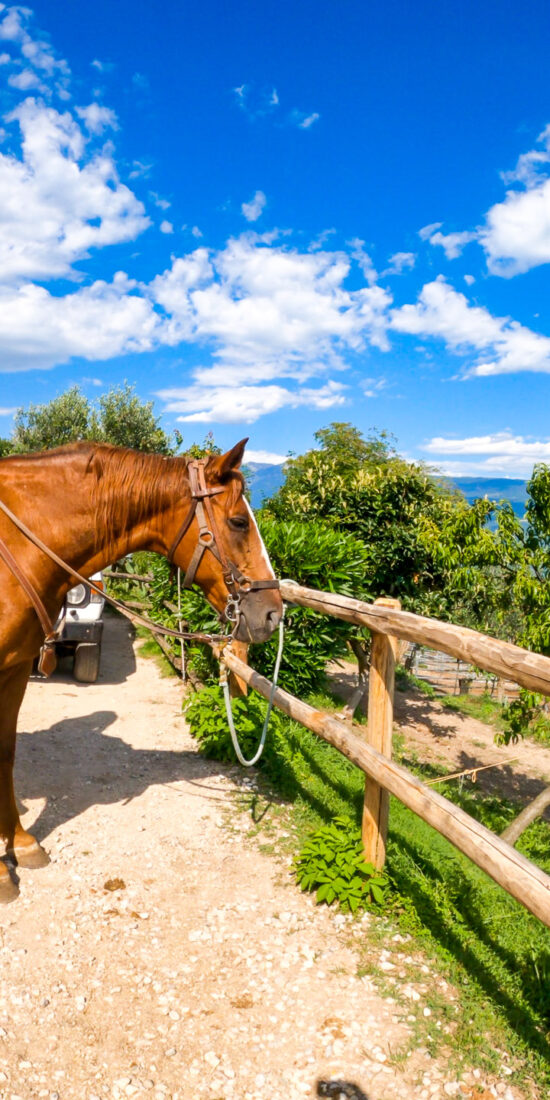 Scuderia Castello - Horseback tour