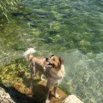 Vacanze cani lago di garda
