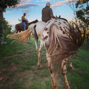 tour a cavallo lago di garda