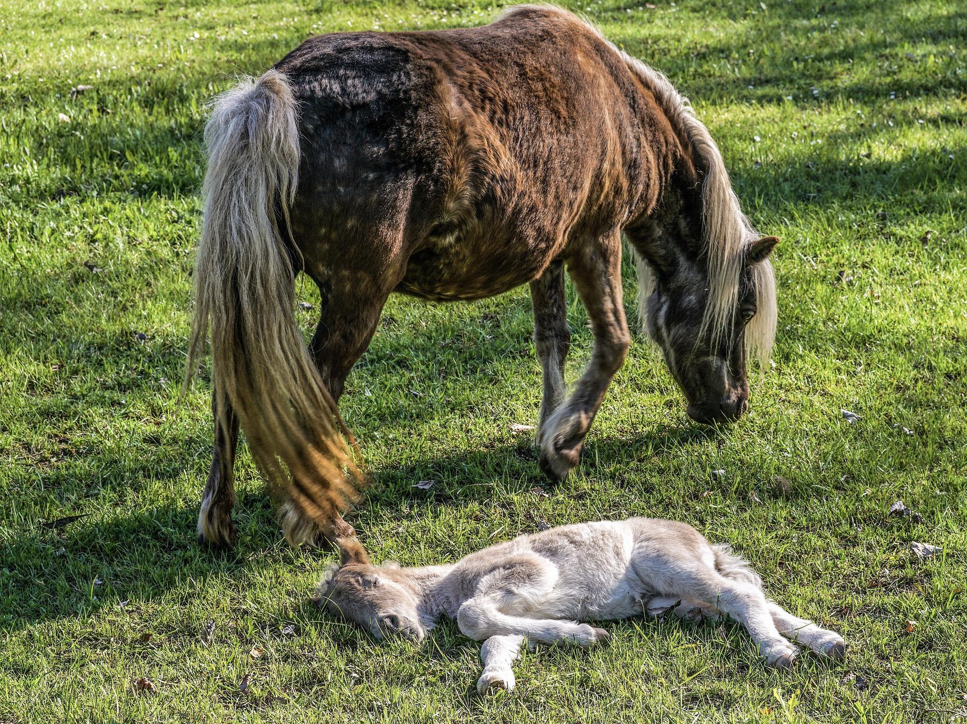 maneggio e pony morso 46