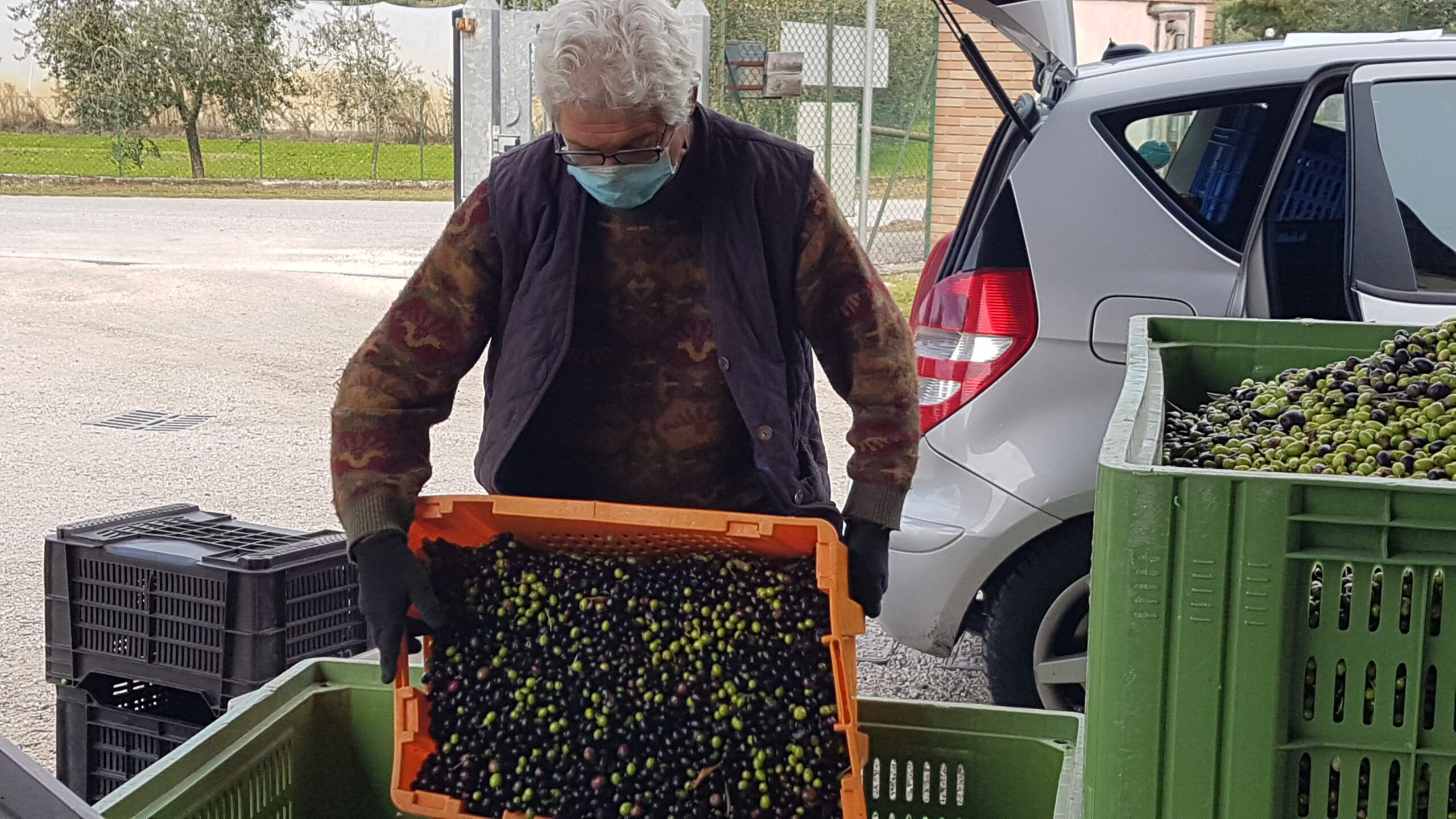 tour a piedi Valtenesi olivi frantoio