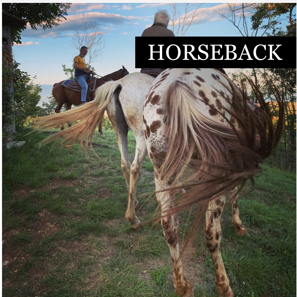 Horseback riding - categories - tours shop - Garda E-motion