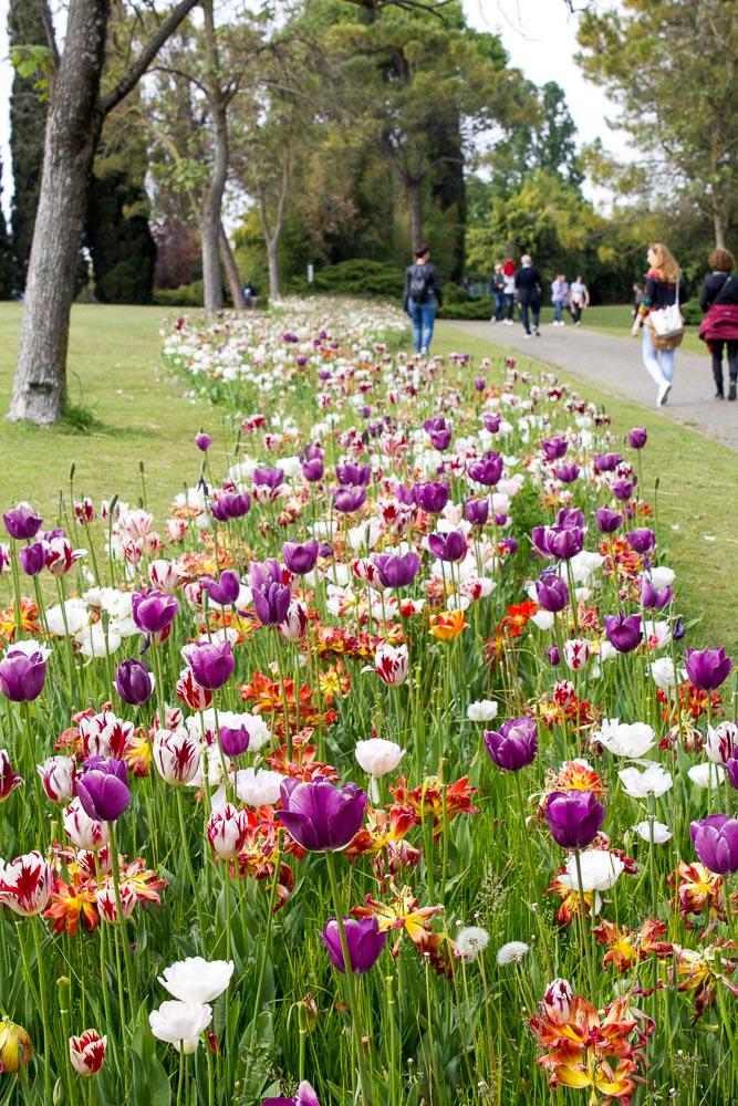 Parco Giardino Sigurtà - visita