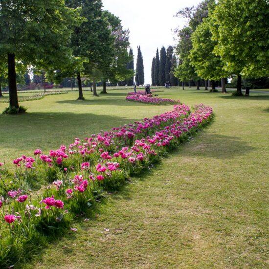 Parco Giardino Sigurtà - tulipani