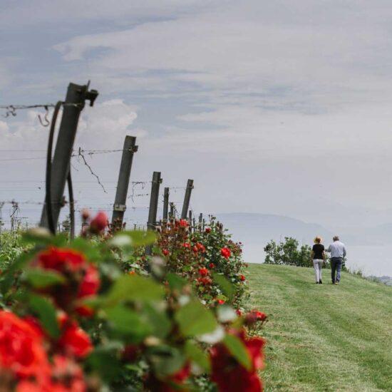 walking wine tour Valtenesi - Lake Garda