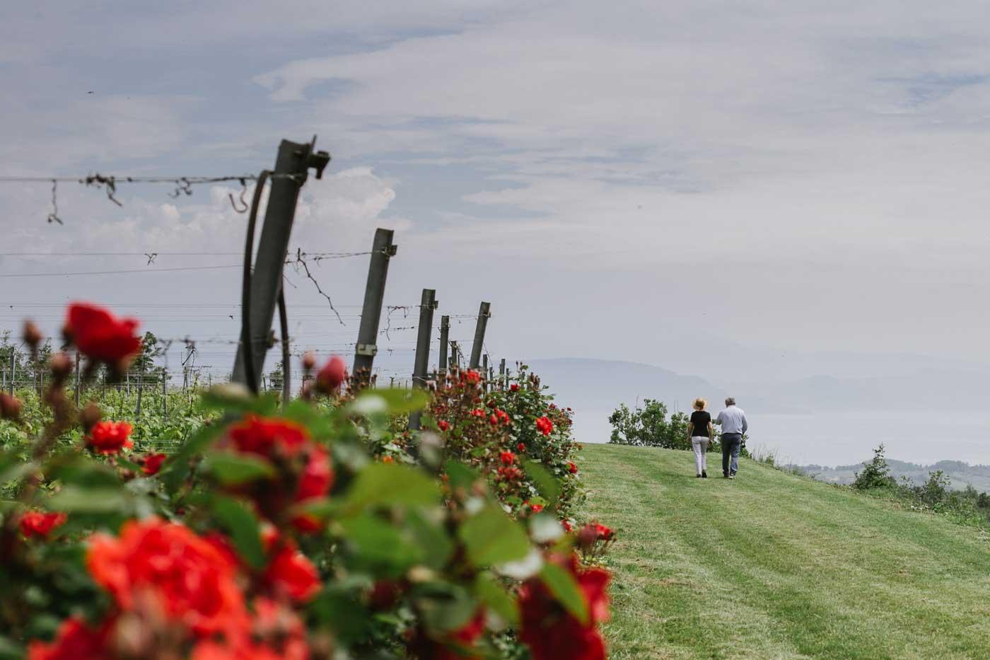 wine tour - Valtenesi - Lake Garda